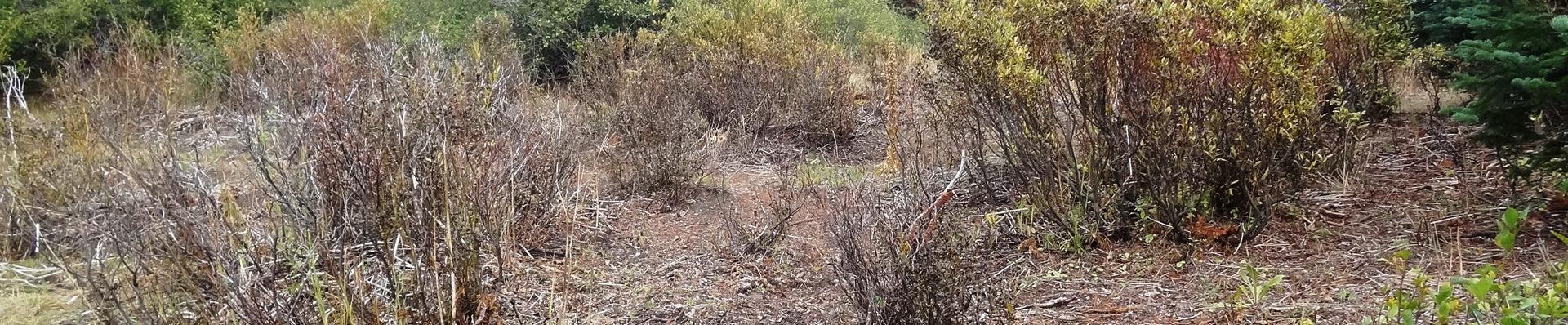 Degraded Willow Wetland Big Meadows